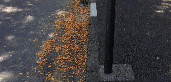 気まぐれオレンジロード